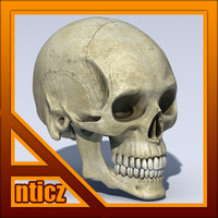 3dsmax skull standard