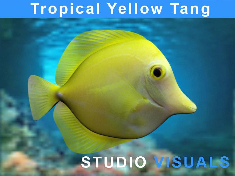 yellow tropical fish max