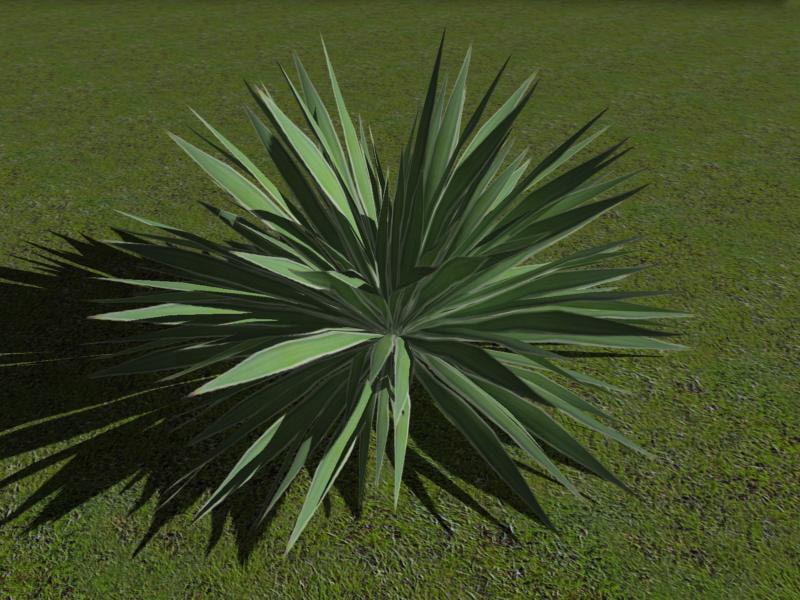 angustifolia zipped max