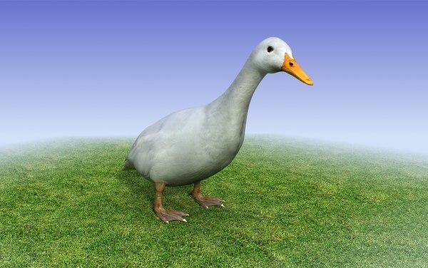 white duck 3d model