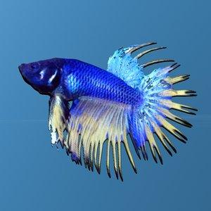 3d beta fish chinese fighting model
