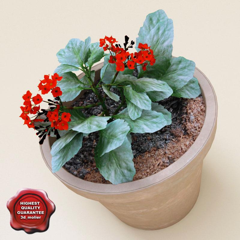 geranium modelled 3d model