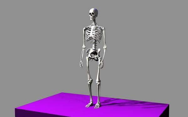 max skeleton - human male