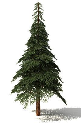 free firtree 3d model