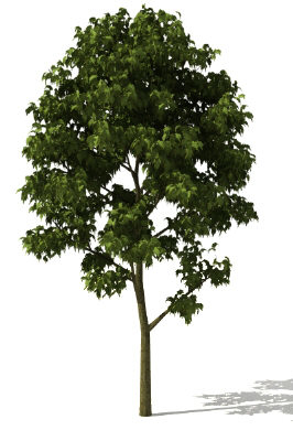 free lwo model tree