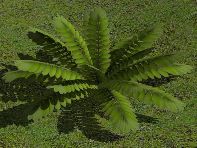 zamia plant zipped max