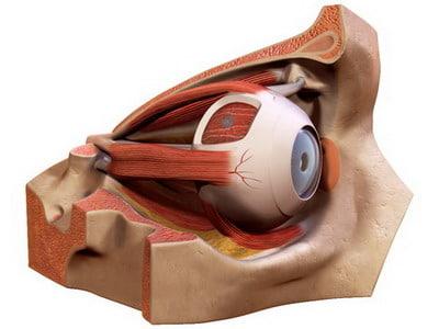 eye cornea 3d lwo