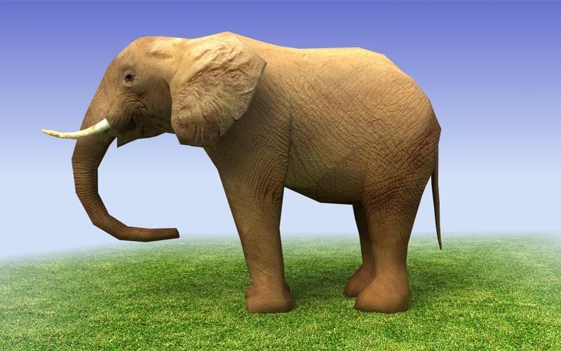 3d african elephant