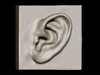 3d ear study model