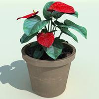 3d anthurium andreanum