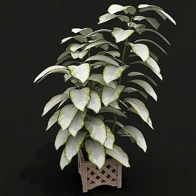 3ds max difenbahia houseplant