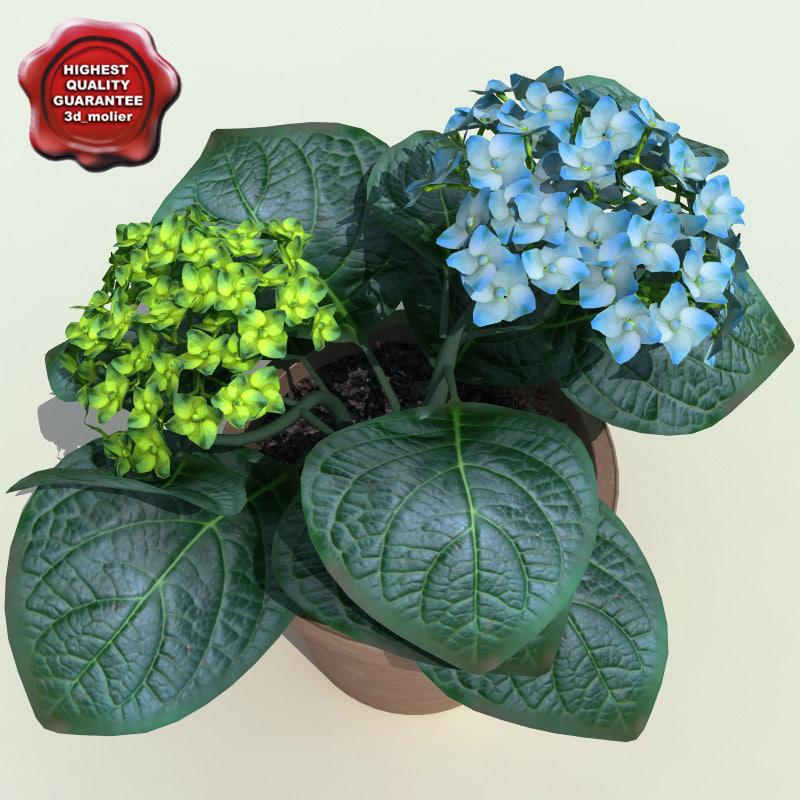 hydrangea tacrophylla 3d 3ds