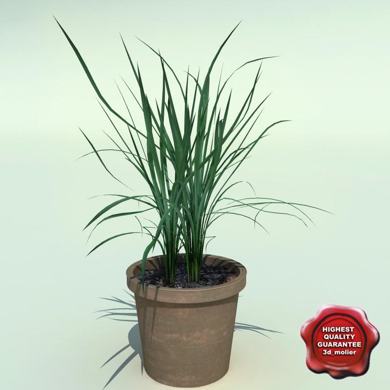 ophiopogon japonicus 3d c4d