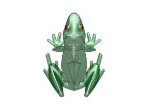 frog skeleton blend