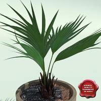 3ds max trachycarpus fortunei