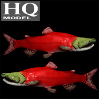fish oncorhynchus nerka 3d model