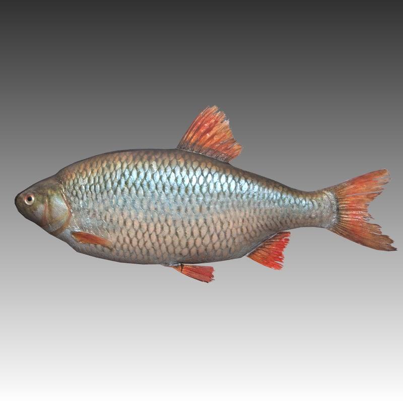 fish 3ds