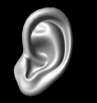 Free Low Poly Ear 3D Models for Download | TurboSquid