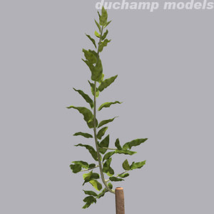 3dsmax young grafted tree trunk