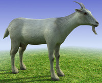 Low poly 3d model Goat