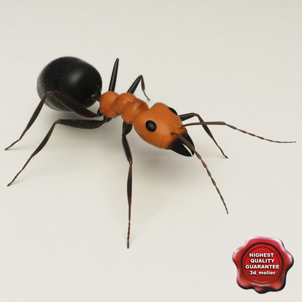 max ant modelled