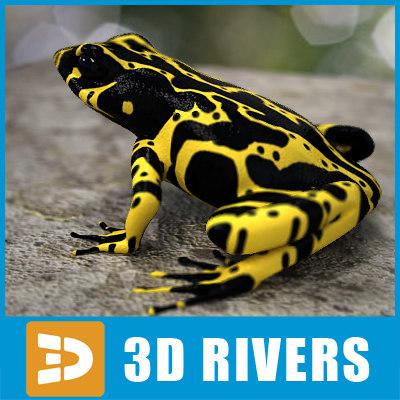 max atelopus frog