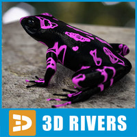 Atelopus frog 03 by 3DRivers