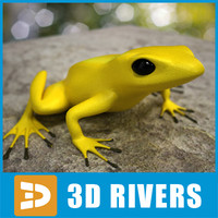Poison dart frog 03 by 3DRivers