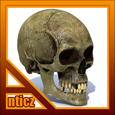 3ds max decayed skull