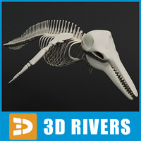 max dolphin skeleton animal