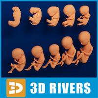 Embryo development low poly by 3DRivers