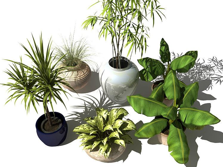 lwo plants