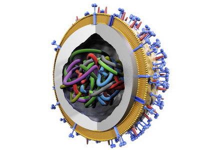 3d model influenza virus