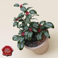 3d camellia japonica