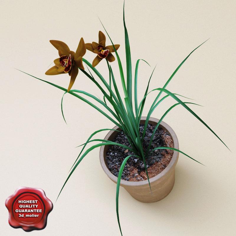 3d max iris danfordiae