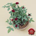 judy fischer roses 3D models