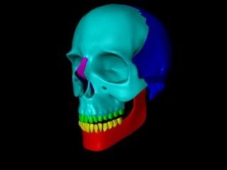 3d model colored skull parts