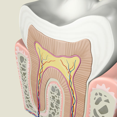 3ds max tooth anatomy