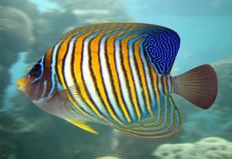 fish 04 3d model