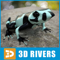 Atelopus frog 04 by 3DRivers
