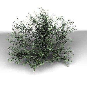 3d tree modo