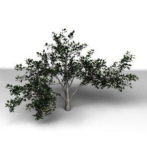 3d model tree modo