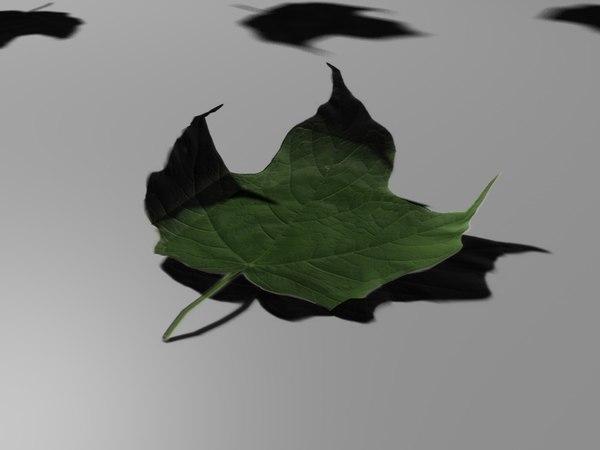 leaf 3d c4d