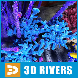 set corals sea 3d model