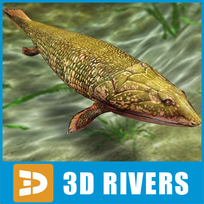 maya panderichthys prehistoric fish