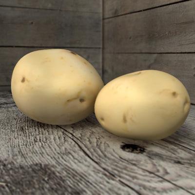 young potato 3d c4d