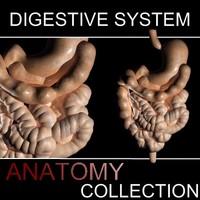 max digestive intestine