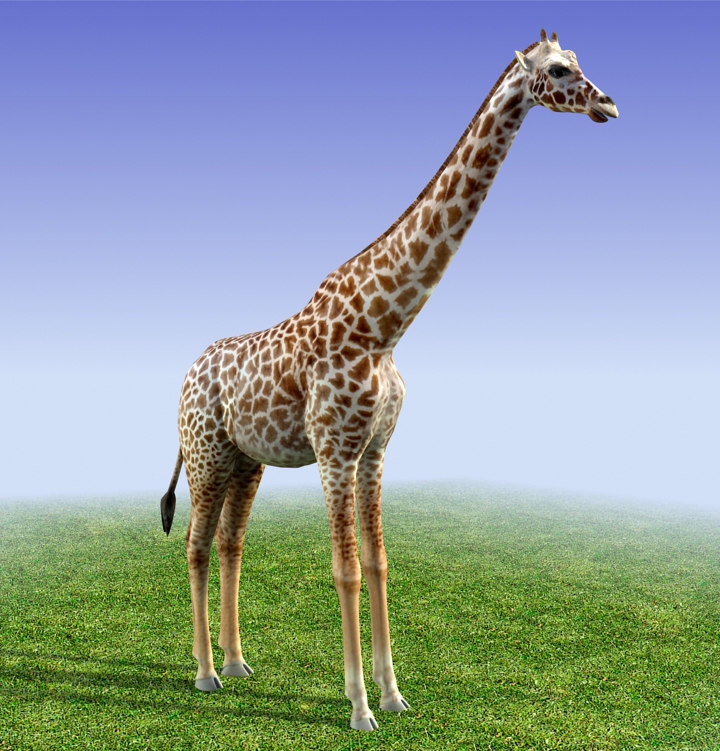 3d model of giraffe polys