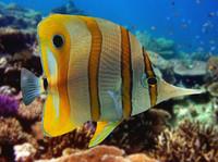 3ds max fish 05