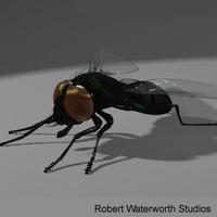 maya blowfly fly